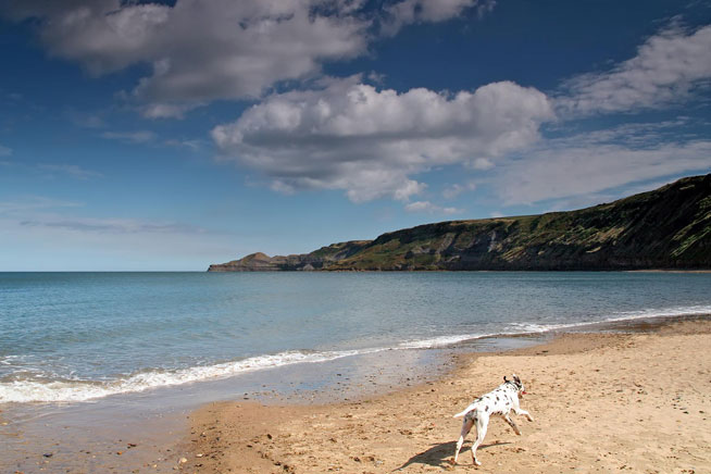 dog-holiday-st-mawes-retreats